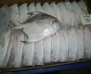 Silver Pomfret-packing