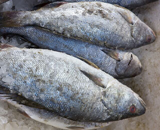 Corvina Fillets-packing