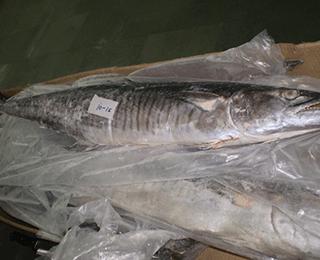 Headon Gutted Kingfish-packing