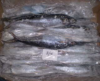 Seerfish Whole Round-packing